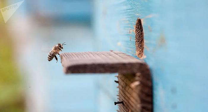 俄罗斯人获得专利进行将装有蜜蜂的蜂箱送入太空的实验 检验能否将其送上火星