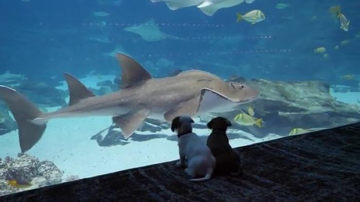 新冠肺炎疫情急速扩散 美国乔治亚州水族馆特别开放给两只狗狗