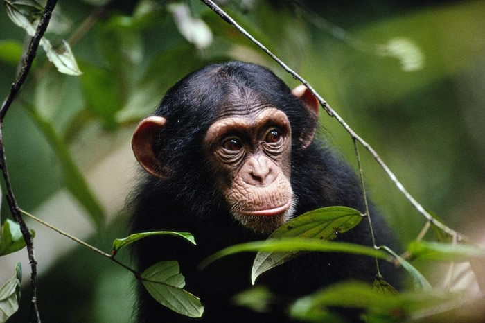 野生动物也懂得靠保持社交距离防止疾病扩散