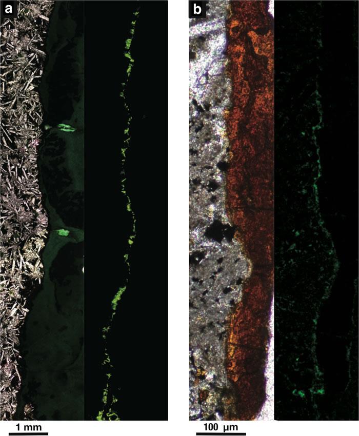 日本科学家发现在大洋底以下100多米的古老火山岩中生活着高度密集的微生物群落