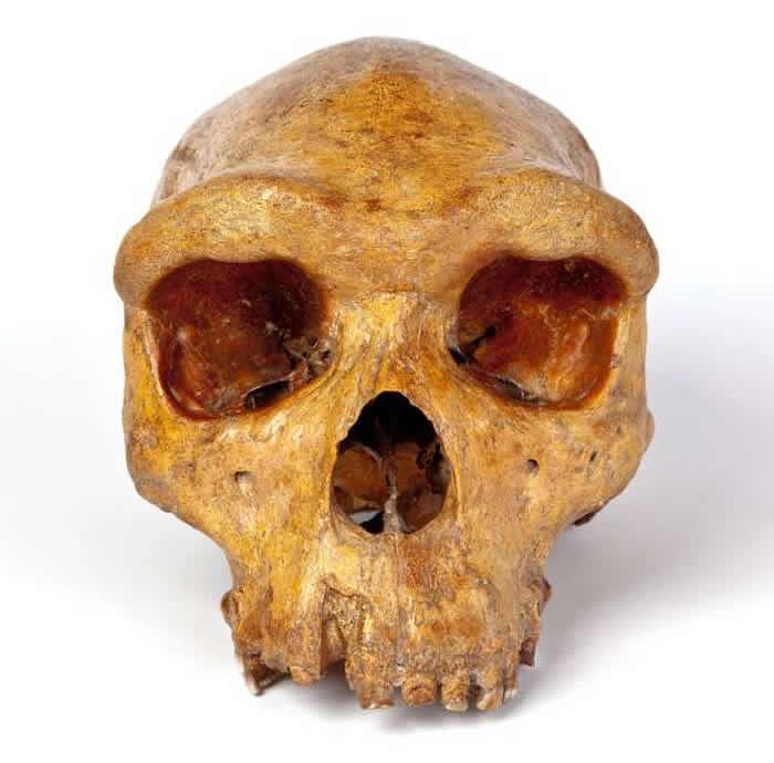 赞比亚布罗肯山古人类头骨化石最新测年结果显示距今29.9万年