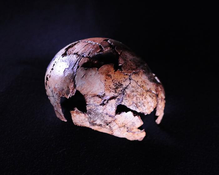 两百万年前南方古猿属、傍人属和最早直立人同