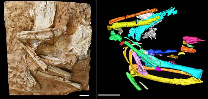 临夏盆地中新世晚期沙鸡化石——干旱临夏鸟揭