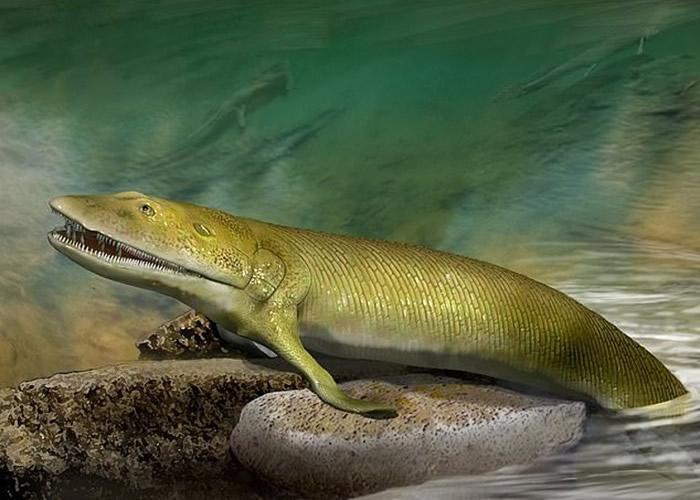 从鳍到手进化过程中它们经历了什么?科学家找到