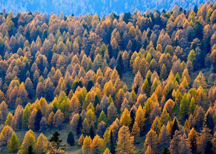 英国科学家研究认为落叶松具有吸音功效最佳的树皮 数据对城市规划具价值