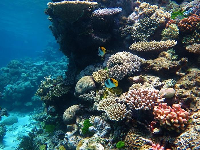 澳大利亚大堡礁遭受有记录以来最广泛的珊瑚白化