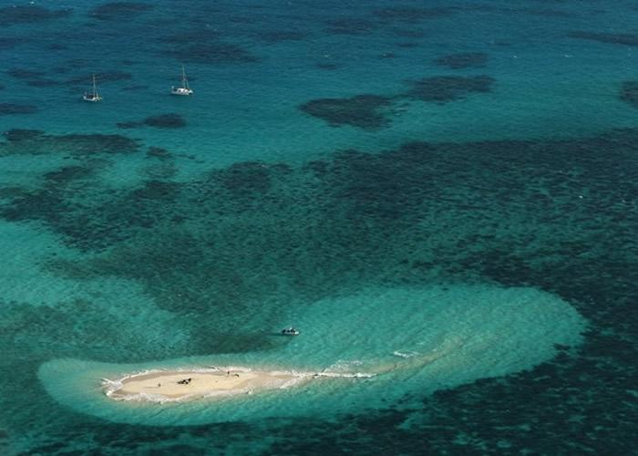 澳洲昆士兰省男子在大堡礁西北岛海域工作期间遇鲨鱼袭击伤重不治