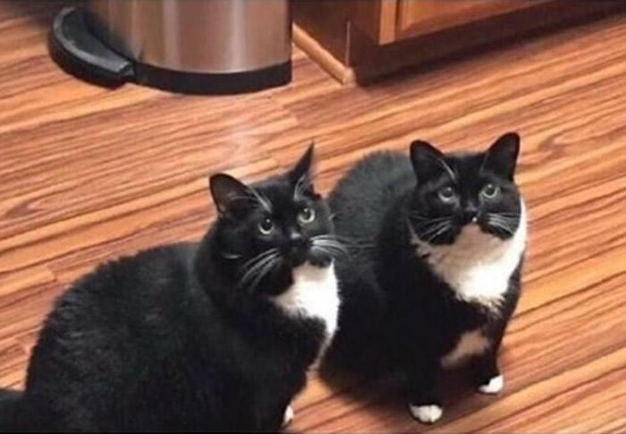 俄罗斯男子以为幸运寻回走失爱猫 未料一周后真正猫咪回家