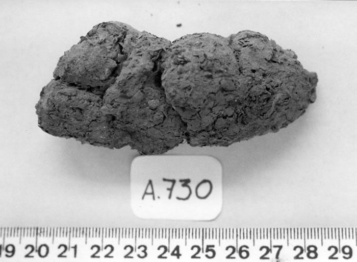 coproID新分析系统能帮助区分人类粪便化石和狗的粪便化石