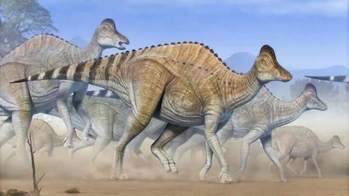 鸭嘴龙科亚冠龙的软骨化石中可能找到恐龙的DNA碎片?
