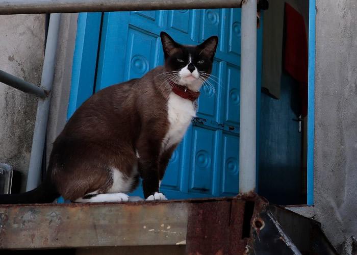 """巴西研究发现猫不似表面所见对""""铲屎官""""漠不关心 与主人分开会焦虑失控"""