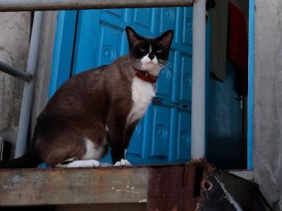 """巴西研究发现猫不似表面所见对""""铲屎官""""漠不关心 与主人分开会"""