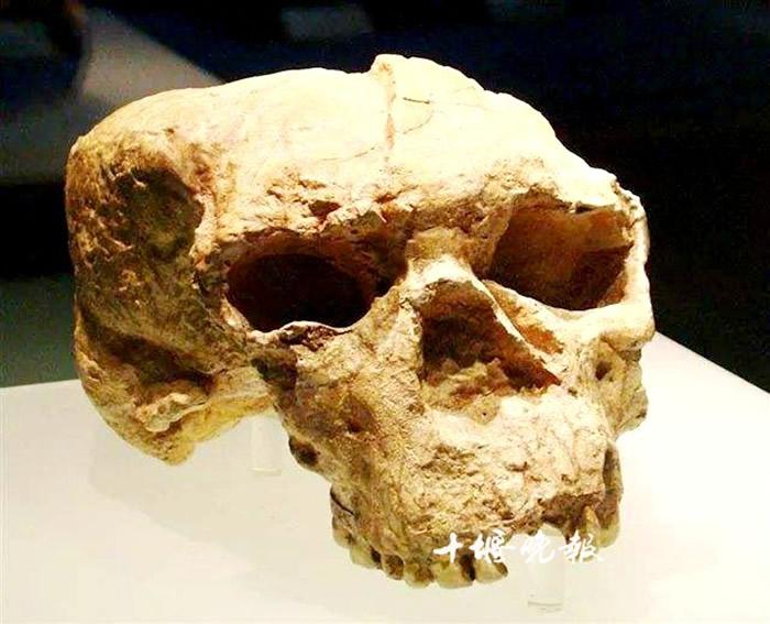"""1989年5月18日在郧县青曲镇发现距今100万年的直立人头骨化石——""""郧县人"""""""