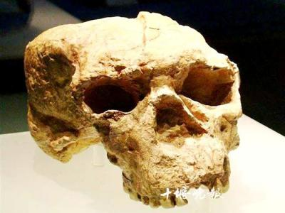 1989年5月18日在郧县青曲镇发现距今100万年的直立人头骨化石――