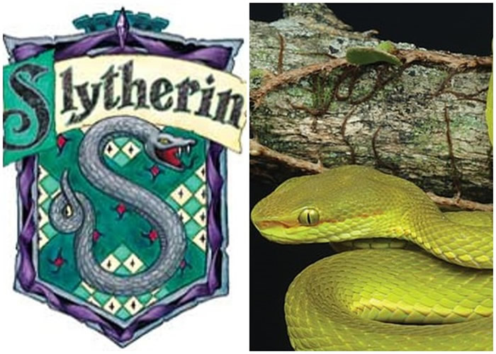萨拉查的蝮蛇形似史莱哲林校徽(左)所绘的蛇。