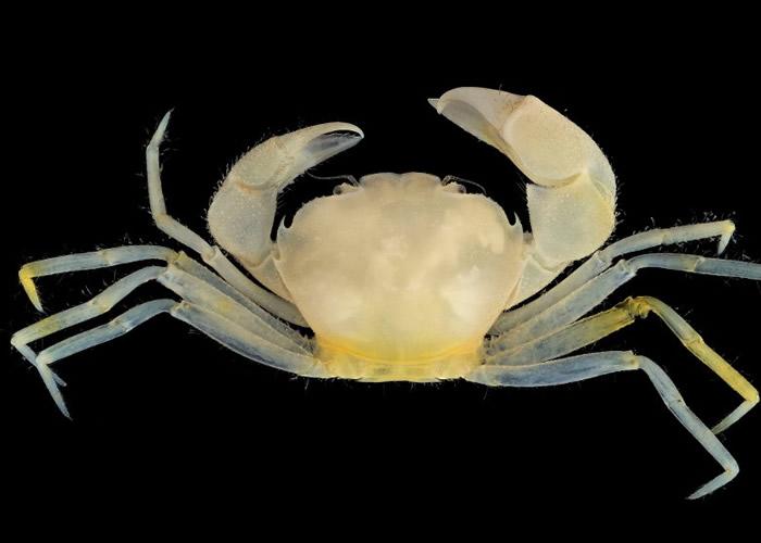 有螃蟹以哈利波特主角Harry及魔药学教授severus命名。
