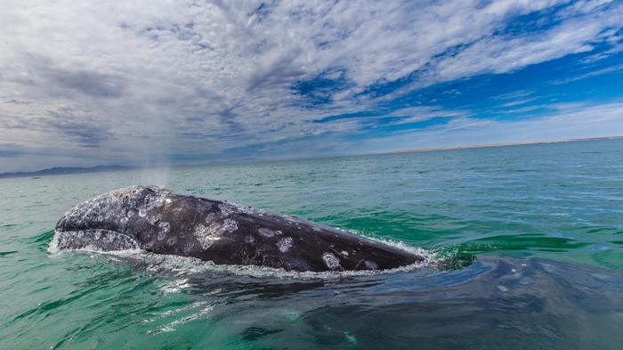 研究证实,船舶噪音与鲸鱼的长期压力有关。 照片来源:Gilad Rom(CC BY-NC 2.0)