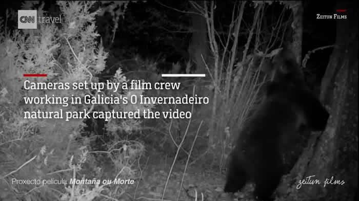 西班牙O Invernadeiro自然保护区150年来再次捕捉到棕熊身影