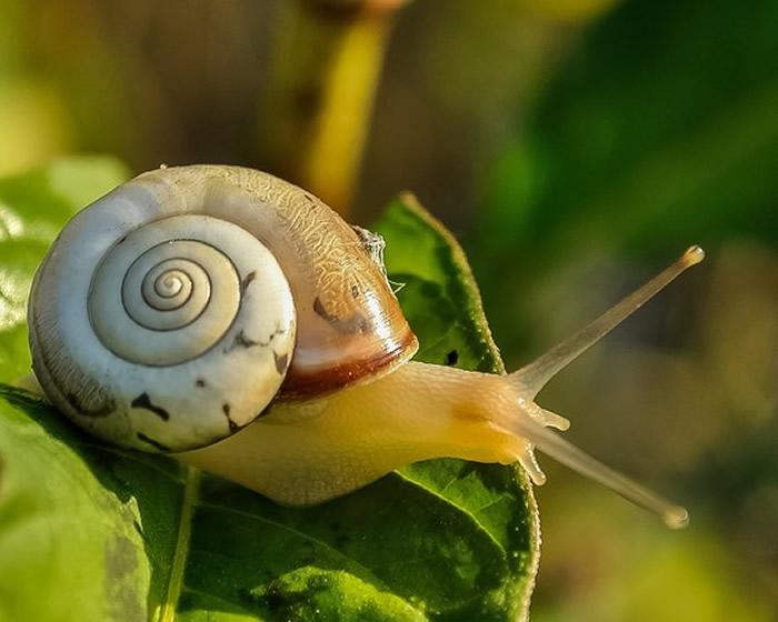 世界上牙齿最多的动物是蜗牛 拥有2万6000颗牙