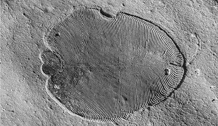 过去十年最重要的科学发现之:改写古生物教科书
