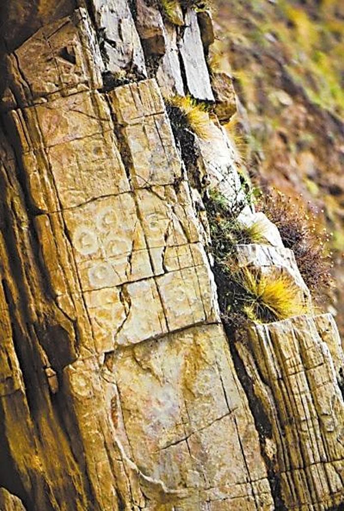 榆中麋鹿沟岩画