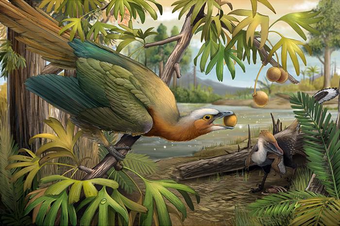 植食性古鸟类 (左)和小型掠食性恐龙(右)的生态复原场景。与肉食性恐龙同处在一个生态系统下的中生代鸟类,演化出不同的取食习性,例如以种子、果实为主的植食性和以小