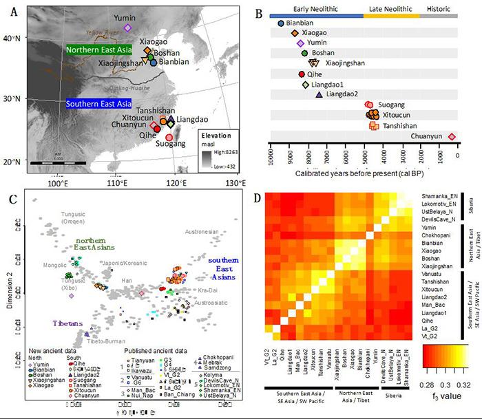 研究样本的地理、年代、遗传信息。(A)地图中标注了本研究样本的地理位置,以秦岭淮河为界划分了东亚南北方,灰色背景反映了海拔高度。(B)研究样本的测年信息,样本来