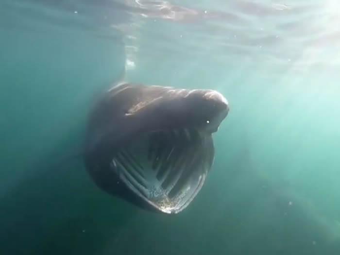爱尔兰4名男子前往克莱尔郡海域冲浪 竟遇到20条姥鲨