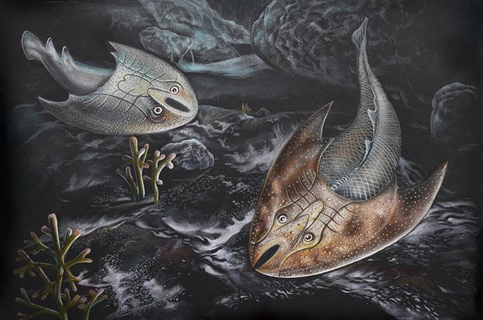 山口中华盔甲鱼(左)和西坑裂吻鱼(右)在淡水河流中的生态复原图(郭肖聪绘)