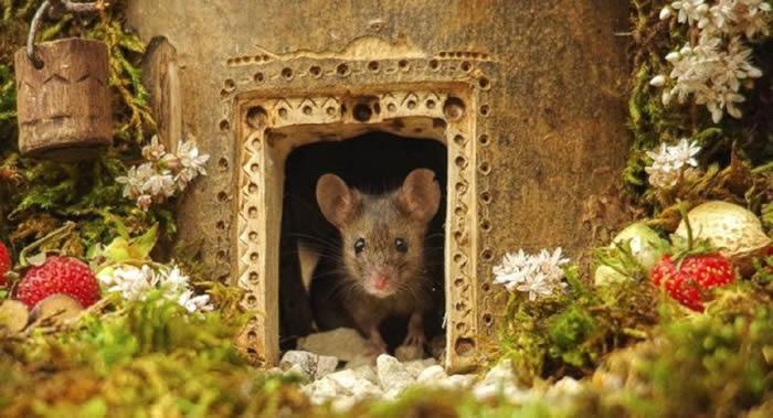 """英国摄影师在花园里为老鼠建造""""霍比特村"""""""