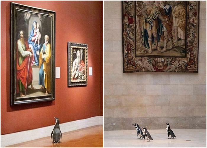 美国密苏里州堪萨斯城动物园企鹅获邀到纳尔逊-阿特金斯艺术博物馆欣赏名画