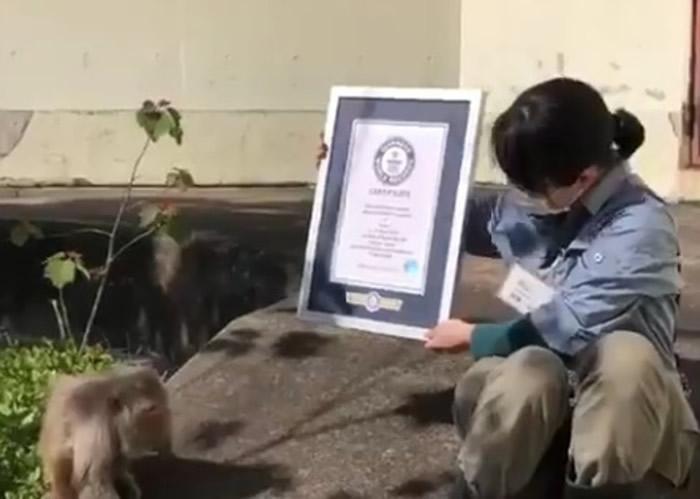 """日本京都市动物园雌性猕猴""""勤子""""迎来42岁生日 为全球最高龄人工饲养猕猴"""