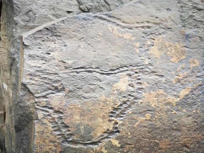 青海省玉树州曲麻莱县巴干乡巴达村通天河岸发现岩画?专家称或是侏罗纪时期虫迹化石