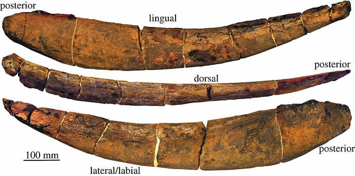 """3.8亿年前海洋中的巨型装甲鱼""""霸鱼""""的进食方式很像今天的鲸鲨"""