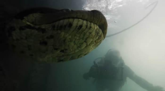 美国水下摄影师Bartolomeo Bove在巴西河流潜水时拍摄到7公尺长超级巨蟒——森蚺