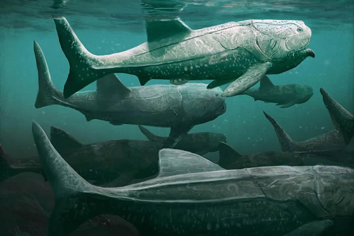 撒哈拉发现3.8亿年前史前海洋中巨大的滤食性