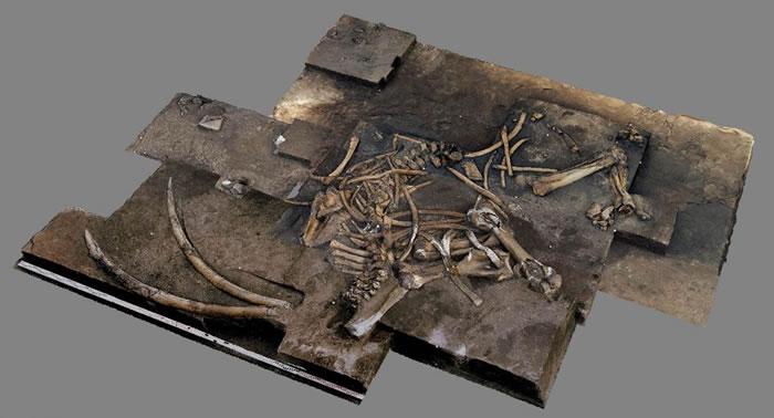 德国下萨克州更新世遗址发现30万年前古菱齿象遗骸化石 数量在10具以上