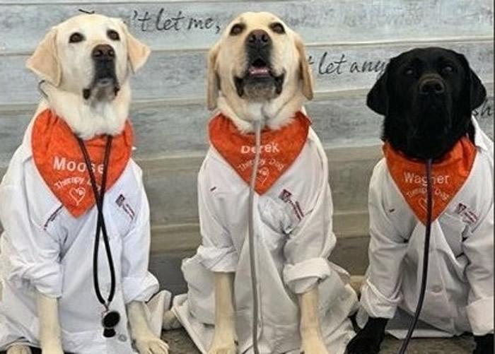 """穆斯(左)与其他""""狗医生""""执勤的样子。"""