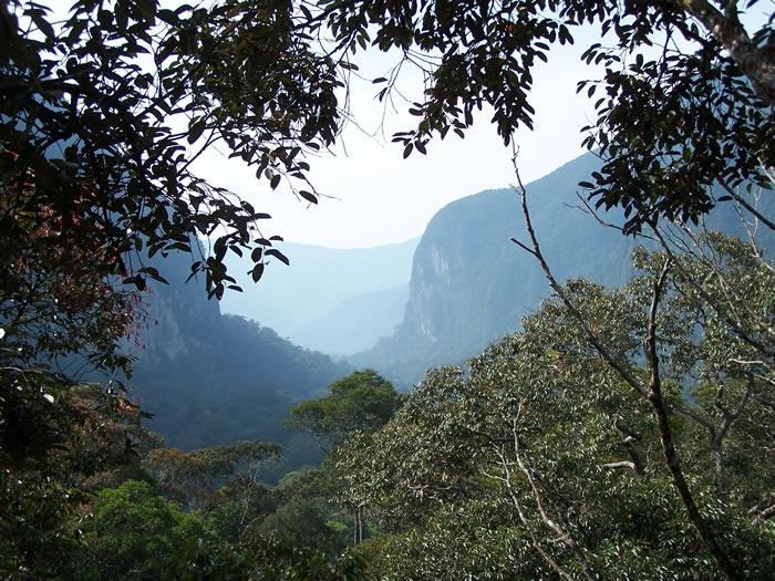 地球的热带森林可能比短期预测所提示的更能从中等程度的暖化中复原