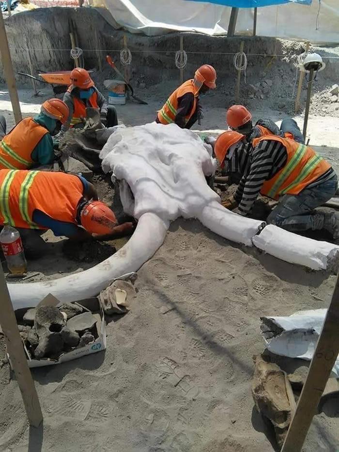 墨西哥圣卢西亚市费利佩·安赫莱斯国际机场建筑工地发现60具猛犸象化石