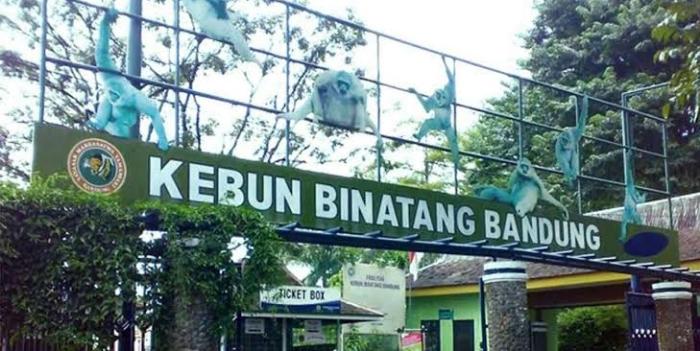 印尼万隆的巴东动物园粮食快耗尽 将宰杀动物喂苏门答腊虎、爪哇豹
