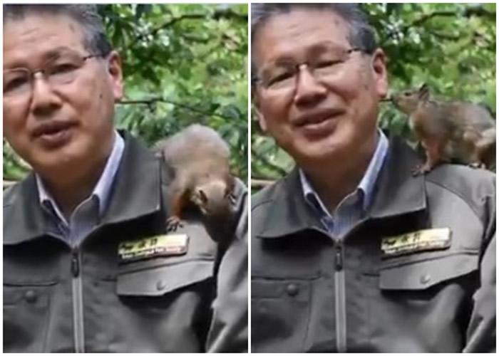 日本东京井之头自然文化园园长致谢 小松鼠爬肩捣乱