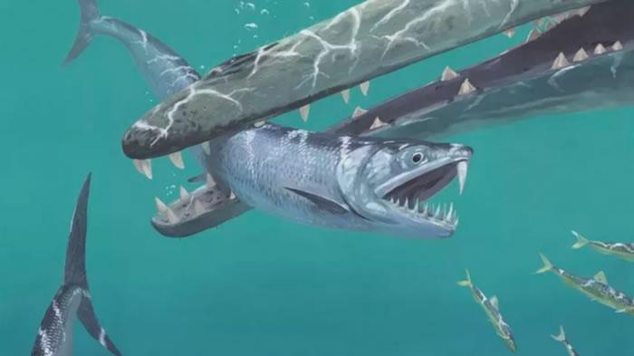 古代凤尾鱼进化成以鱼为食的捕食者 用上颚剑齿捕杀猎物