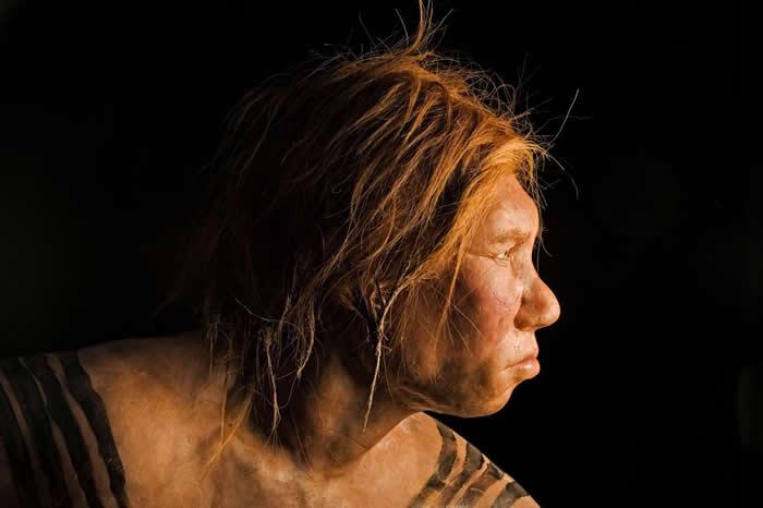 遗传自远古尼安德特人的基因变异体赋予现代人更高的生育能力