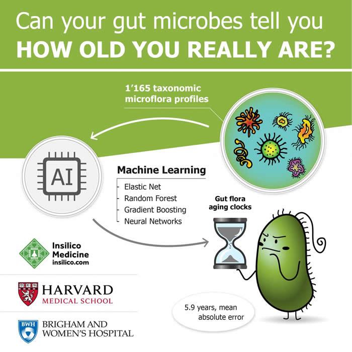 肠道细菌群能否反映你的真实年龄?