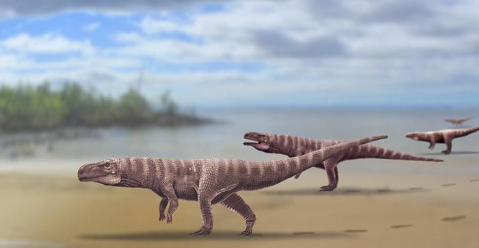 韩国发现的足迹化石来自双足行走的现代鳄鱼祖