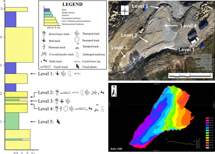 韩国发现的足迹化石来自双足行走的现代鳄鱼祖先 之前曾被认为是巨型翼龙足迹