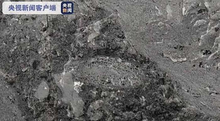 世界最大规模天坑群——汉中天坑群首次发现8毫米䗴化石