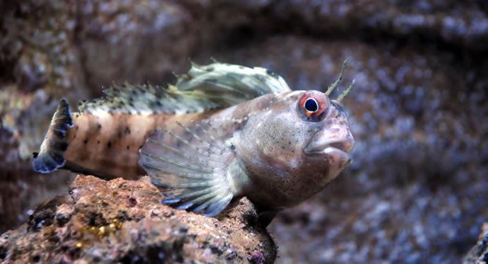 《功能生态学》杂志:科学家弄清楚史前鱼类是在