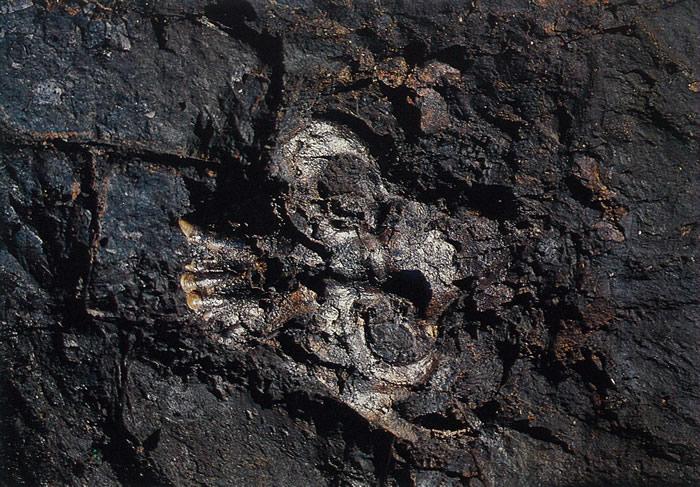 资料图:禄丰古猿头骨化石